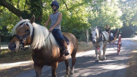 chevaux, calèche