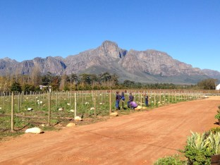 At Solms Delta, near Franschoek en route to Stellenbosch
