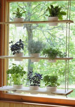Incredible indoor hanging herb garden (9)
