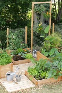 Affordable backyard vegetable garden designs ideas 27