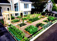 Inspiring small front garden ideas on a budget 11