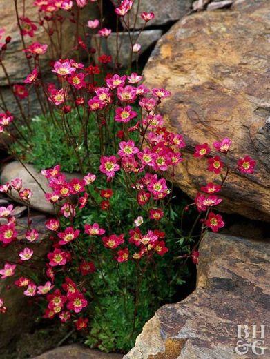Stunning garden design ideas with stones 06