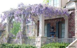 Stunning garden pergola ideas with roof 10