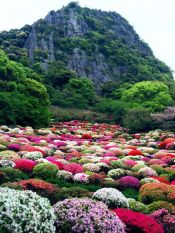 Stunning japanese garden ideas plants you will love 09