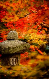 Stunning japanese garden ideas plants you will love 17