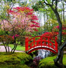Stunning japanese garden ideas plants you will love 21