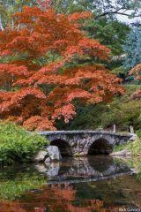 Stunning japanese garden ideas plants you will love 33