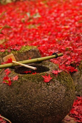 Stunning japanese garden ideas plants you will love 37