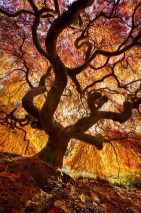 Stunning japanese garden ideas plants you will love 59