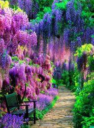 Stunning japanese garden ideas plants you will love 61