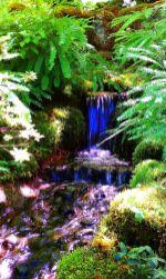 Stunning japanese garden ideas plants you will love 63