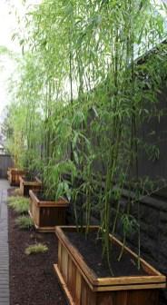 Diy backyard privacy fence ideas on a budget (14)