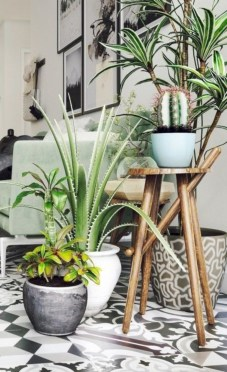 Stunning indoor plants ideas for your living room and bedroom 08