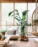 Stunning indoor plants ideas for your living room and bedroom 09