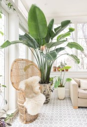 Stunning indoor plants ideas for your living room and bedroom 17