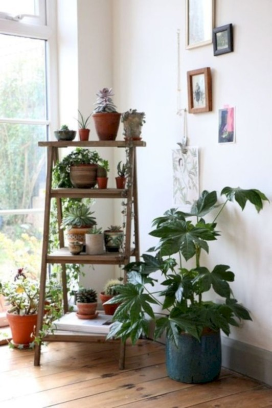 Stunning indoor plants ideas for your living room and bedroom 23