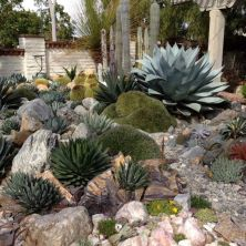 Beautiful rock garden landscaping ideas 39