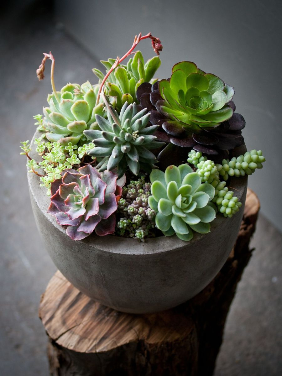 Creative diy indoor succulent garden ideas (10)