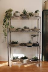 Creative diy indoor succulent garden ideas (11)