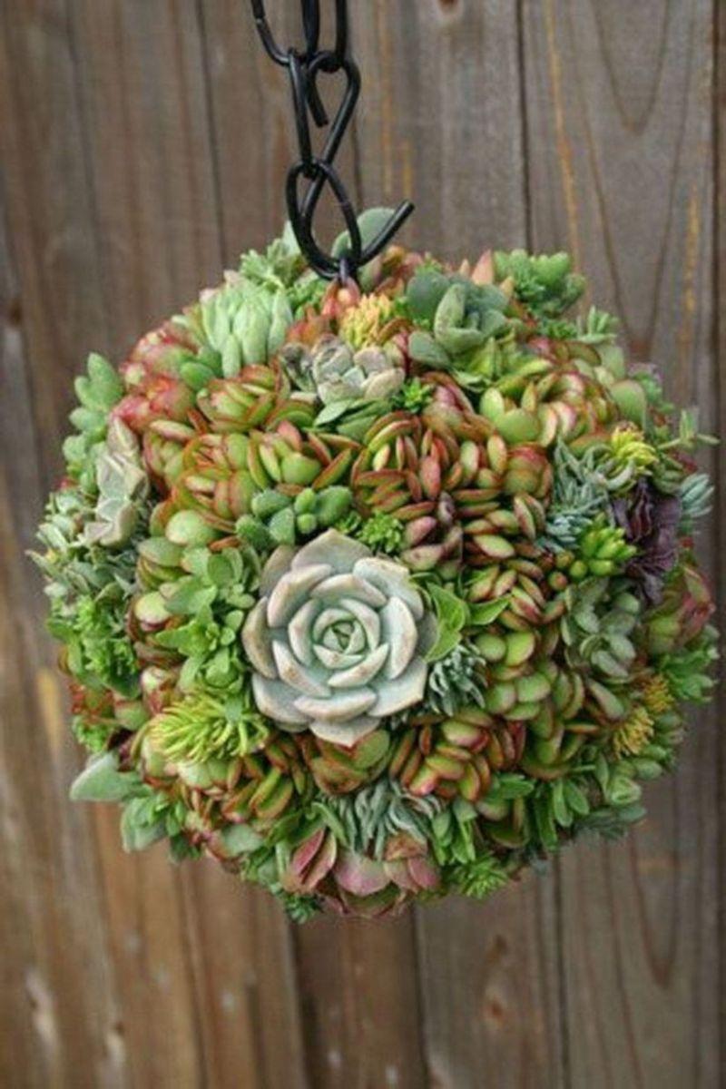 Creative diy indoor succulent garden ideas (15)