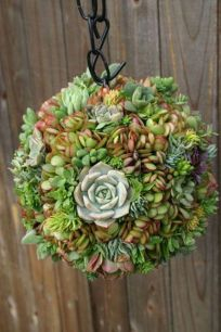 Creative diy indoor succulent garden ideas (15)