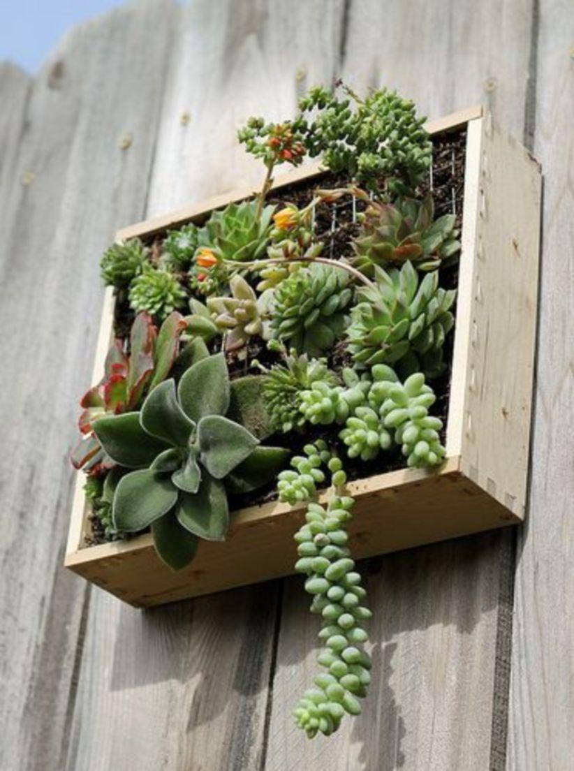 Creative diy indoor succulent garden ideas (17)