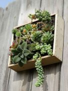 Creative diy indoor succulent garden ideas (17)