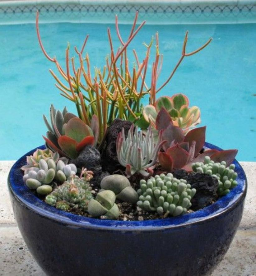 Creative diy indoor succulent garden ideas (19)