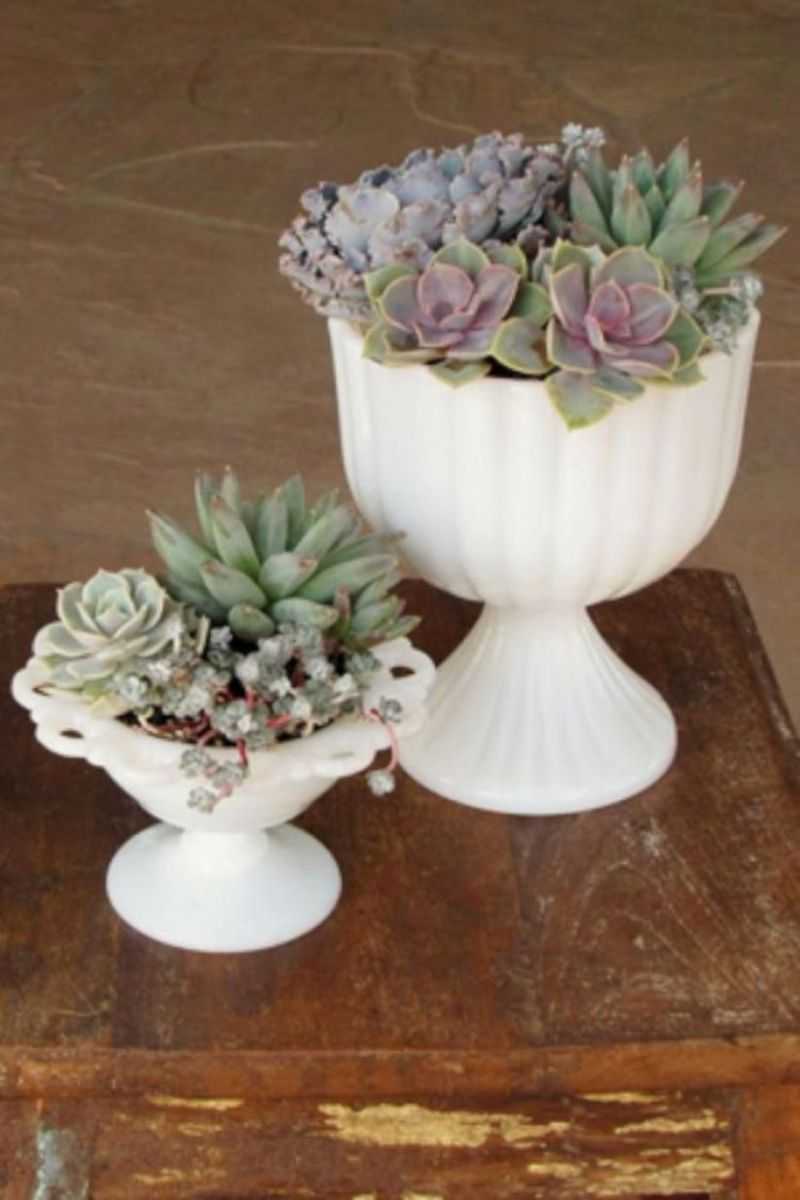 Creative diy indoor succulent garden ideas (25)