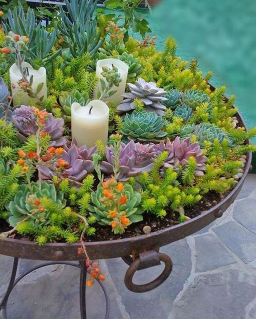 Creative diy indoor succulent garden ideas (26)