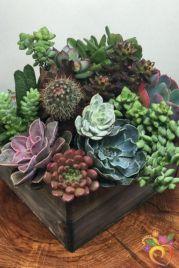 Creative diy indoor succulent garden ideas (29)
