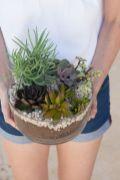 Creative diy indoor succulent garden ideas (31)