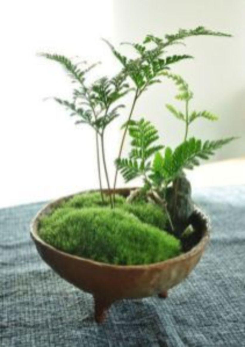 Creative diy indoor succulent garden ideas (34)