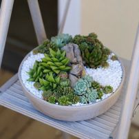 Creative diy indoor succulent garden ideas (4)