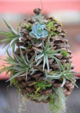 Creative diy indoor succulent garden ideas (43)