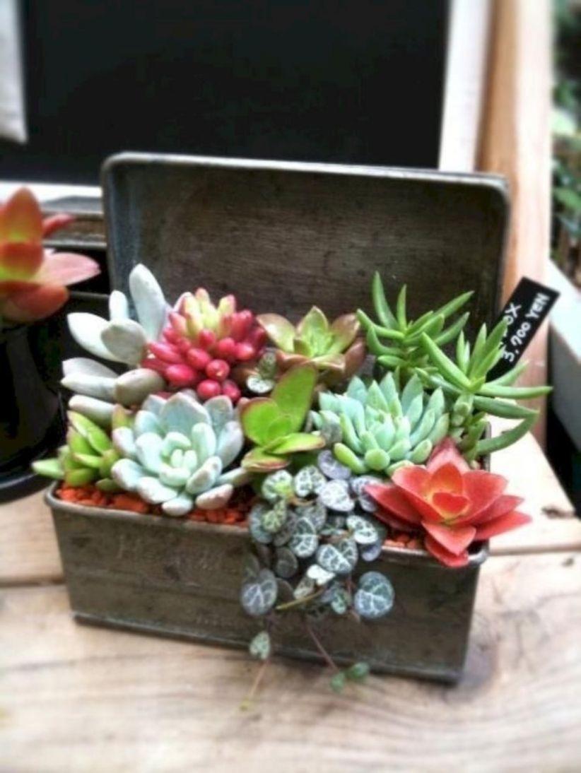 Creative diy indoor succulent garden ideas (5)