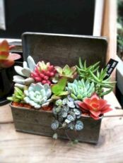 Creative diy indoor succulent garden ideas (5)