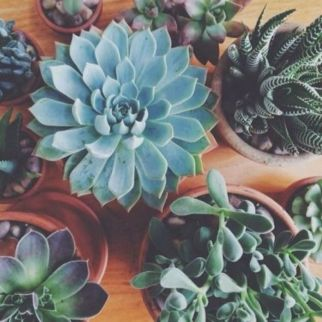 Creative diy indoor succulent garden ideas (8)