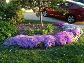 Best and beautiful tree ring planter ideas 04
