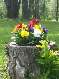 Best and beautiful tree ring planter ideas 11