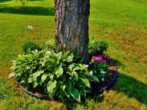 Best and beautiful tree ring planter ideas 14