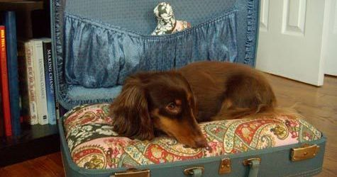 Admirable diy pet bed 45