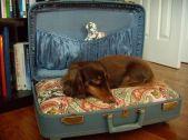Admirable diy pet bed 45