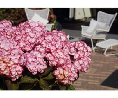 Impressive fall flowers to plant in your garden 04
