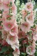 Impressive fall flowers to plant in your garden 06