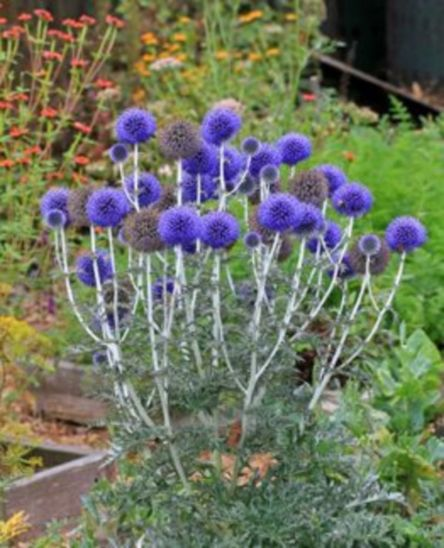 Impressive fall flowers to plant in your garden 14