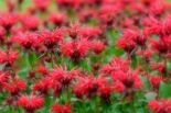 Impressive fall flowers to plant in your garden 19