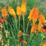 Impressive fall flowers to plant in your garden 20