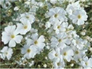 Impressive fall flowers to plant in your garden 24