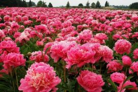 Impressive fall flowers to plant in your garden 29